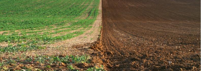 Toprak iyilestirme